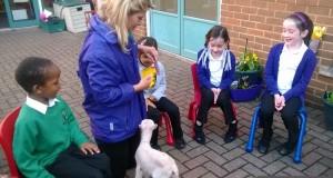 Lamb visit at Kings Oak